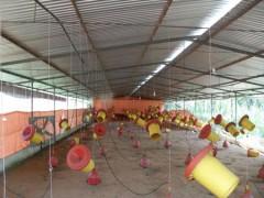 Venta de granja de producción de pollos en Belén Carabobo