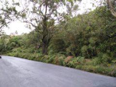 Terreno en Venta Via La Colonia Tovar Edo. Aragua