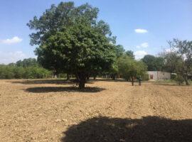 13 Hectáreas Venta de Finca, en Asentamiento Campesino Mirandita, El Paito, Valencia, Estado Carabobo.